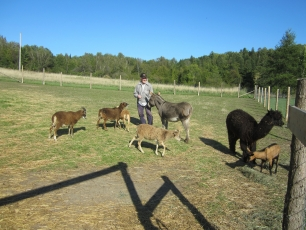Wales Home residents take care of several petting zoo animals from Ferme Frosttie Farm every summer.